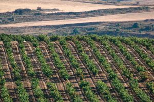 spanish vineyards